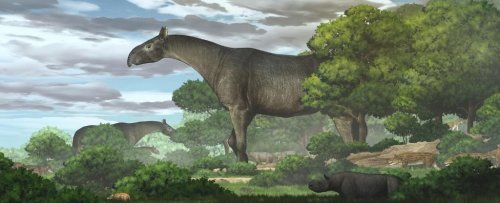 New Fossil Reveals One of The Largest Land Mammals Ever Found, And It's a Rhino