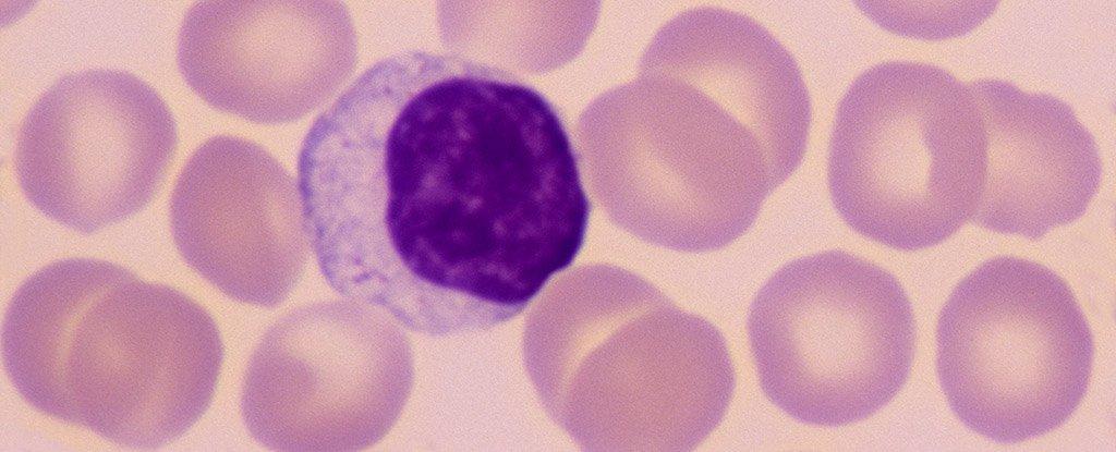 Coronavirus Updates - cover