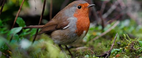 Source of a Weird Quantum Sense Found in an Actual Migratory Bird For The First Time