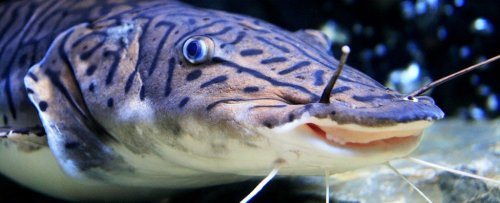 Do Fish Have Feelings? What Science Says About Animal Sentience