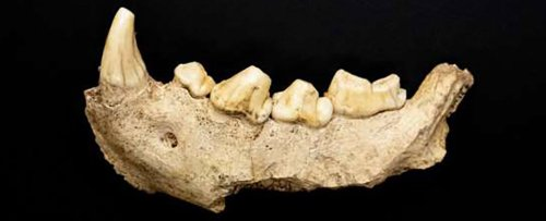 Grisly Lair in Italy Was Where Ancient Hyenas Feasted on Their Neanderthal Prey