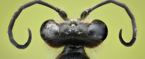 Signs of 'Insect Apocalypse' Could Be Linked to Particular Human-Made Structures