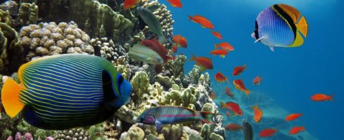 A Mass Extinction Event Is on The Horizon if Marine Life Keeps Fleeing The Equator