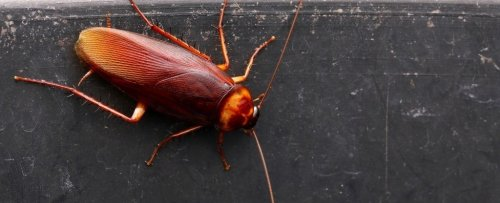Scientists Think Cockroach Milk Could Be The Next Superfood, And We Wish We Were Kidding