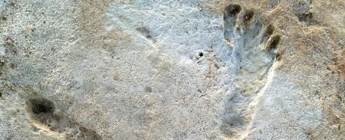 Incredible Fossil Footprints Are The Earliest Known Trace of Humans in North America