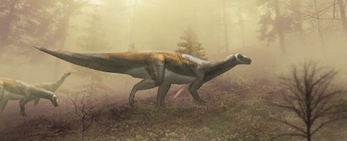 This Fearsome 'Carnivorous Raptor' Turned Out to Be Not Quite What We Thought