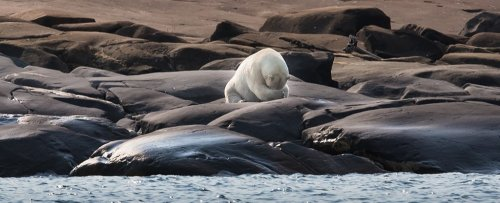 Leading Scientist Warns an Irreversible Arctic Tipping Point May Already Be Triggered