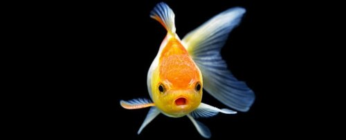 Fish May Actually Feel Pain After All, Argues a New Paper