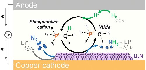Nitrogen reduction to ammonia at high efficiency and rates based on a phosphonium proton shuttle
