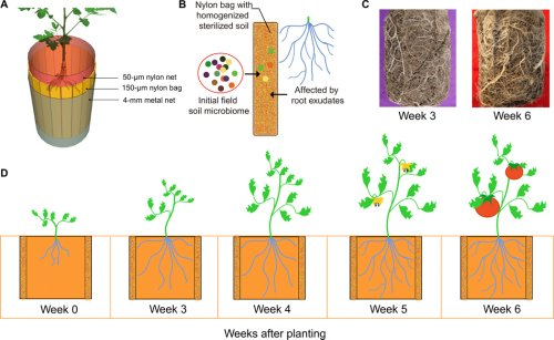 Initial soil microbiome composition and functioning predetermine future plant health