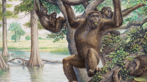 Earth was once a planet of the apes—and they set the stage for human evolution
