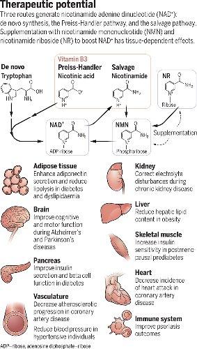 Supplements to treat prediabetes