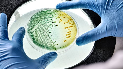 Scientists 'program' living bacteria to store data