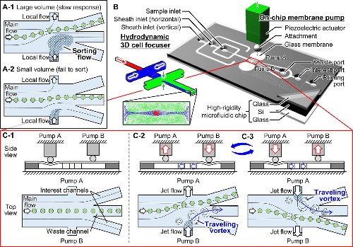 Breakthrough in purification of fossil pollen for dating of sediments by a new large-particle on-chip sorter
