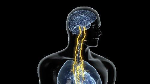 Your body's 'hidden' senses might help treat epilepsy, depression