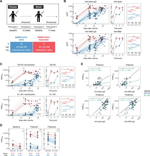 Distinct antibody and memory B cell responses in SARS-CoV-2 naïve and recovered individuals following mRNA vaccination