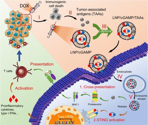 In situ cancer vaccination using lipidoid nanoparticles