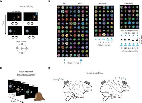 Common coding of expected value and value uncertainty memories in the prefrontal cortex and basal ganglia output