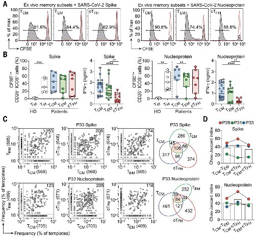 Clonal analysis of immunodominance and cross-reactivity of the CD4 T cell response to SARS-CoV-2