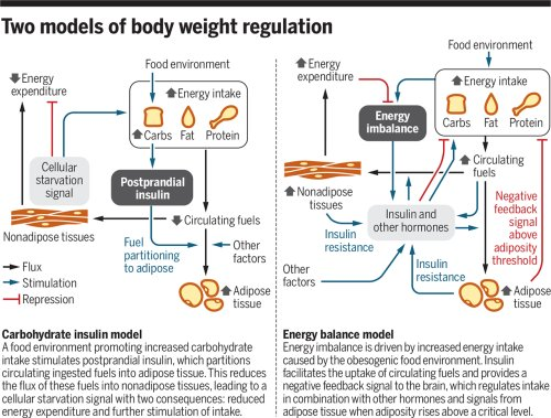 Carbohydrates, insulin, and obesity
