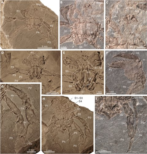 Exceptional preservation of mid-Cretaceous marine arthropods and the evolution of novel forms via heterochrony