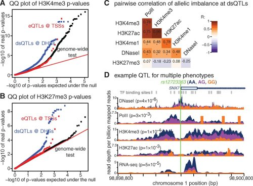Identification of Genetic Variants That Affect Histone Modifications in Human Cells