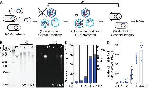 Evolution of a virus-like architecture and packaging mechanism in a repurposed bacterial protein