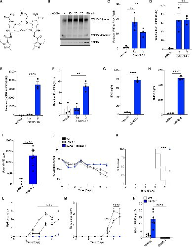 A diamidobenzimidazole STING agonist protects against SARS-CoV-2 infection