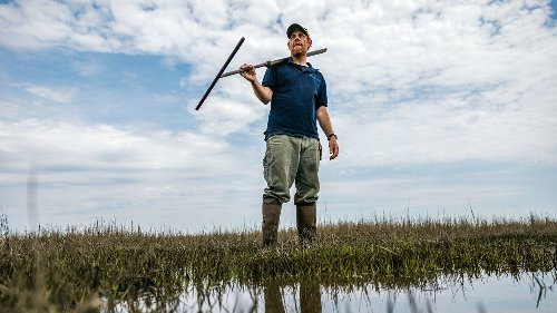 This ecologist thinks coastal wetlands can outrun rising seas. Not everyone's convinced