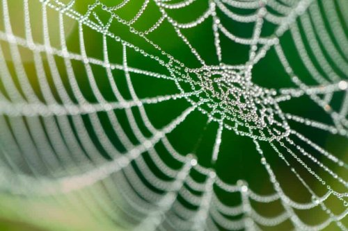 MIT Researchers Create Music From Spider Webs