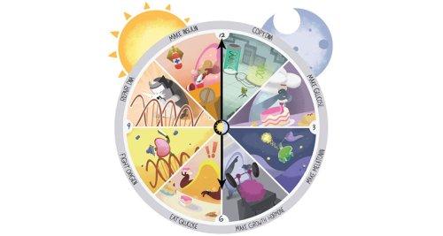 The origin of biological clocks