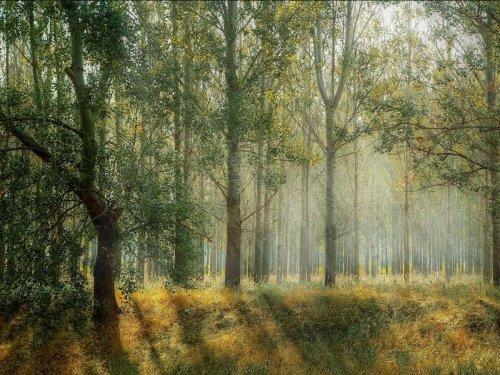 Combien d'arbres pour arrêter le réchauffement climatique ? - Sciences et Avenir