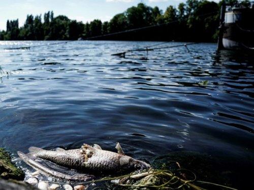 Des rivières françaises polluées aux détergents, insecticides, révèlent deux études - Sciences et Avenir