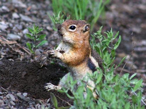 La personnalité des écureuils dicte leur rapport à l'espace dans lequel ils évoluent