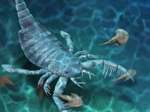 Un scorpion de mer géant éteint découvert en Chine - Sciences et Avenir