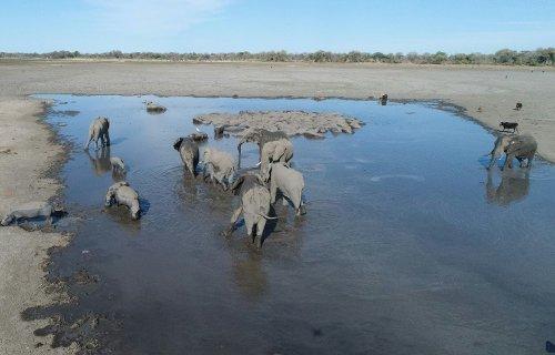 """Chasse à l'éléphant au Botswana, """"une honte"""" dénonce l'ex-icône Brigitte Bardot"""