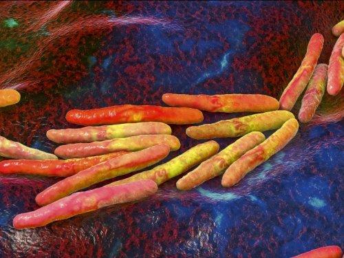 Des pistes pour vaincre la tuberculose - Sciences et Avenir