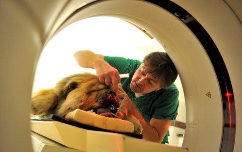 Stem Cells for Snoopy: Pet Medicines Spark a Biotech Boom