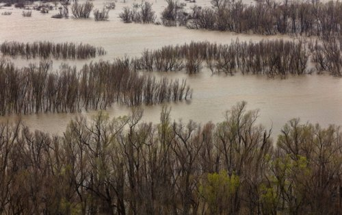 Rising Costs of U.S. Flood Damage Linked to Climate Change