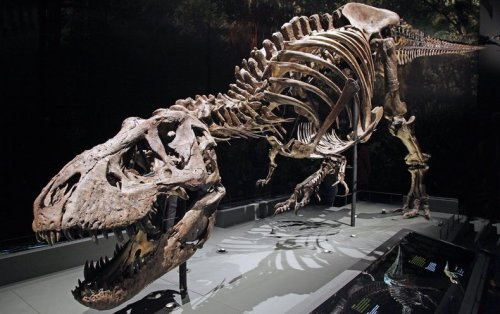 Who Laps Whom on the Walking Track--Tyrannosaurus rex or You? Science Has a New Answer - Scientific American
