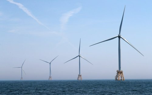 New Digital Tool Tracks Impacts of Offshore Wind on Marine Life