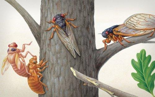 Brood X Cicadas Are Emerging at Last - Scientific American