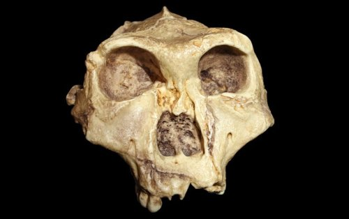How 3D Scanning is Reinventing Paleoanthropology