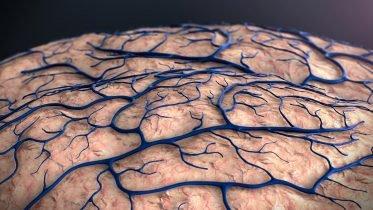 Schizophrenia: Brain Capillary Structures Show a Correlation With Their Neuron Structures