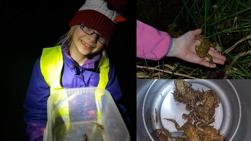 For five years, a 10-year-old has been saving toads, newts and frogs in East Lothian