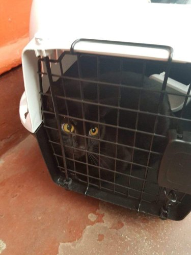 Cat left in box on Edinburgh street saved by passer-by