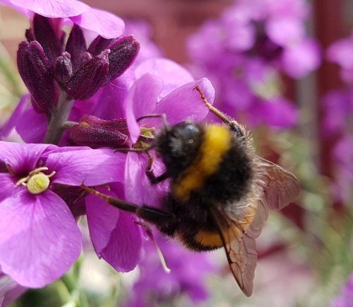 East Lothian Council stands by 'weedspraying' despite public concern for wildflowers and bees