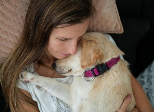 These are 10 of the most loving and affectionate breeds of adorable dog