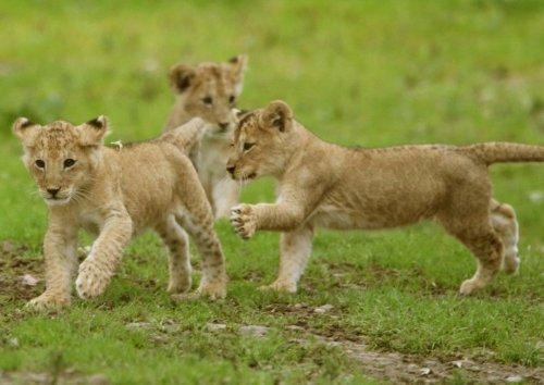 Wildlife charity calls on Scottish Government to investigate animal welfare concerns at Blair Drummond Safari Park