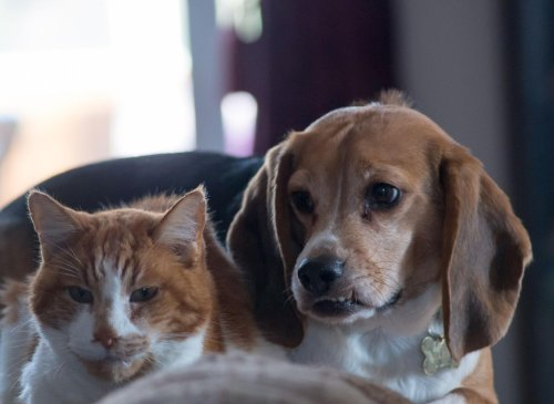 10 breeds of adorable dog that get on best with cats - they might even become friends